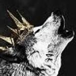 Profile picture of AlphaWolfQueen