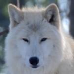Profile picture of Glacierpaw