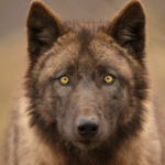 Profile picture of Restlicher